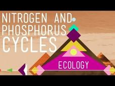 Nitrogen and Phosphorus Cycles: Always Recycle! Part 2 Video