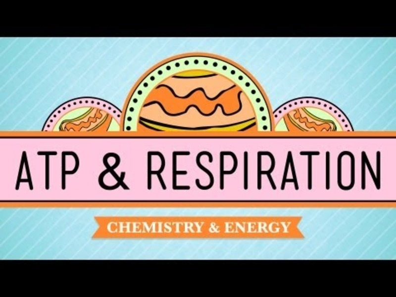 ATP and Respiration Video