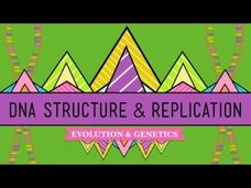DNA Structure and Replication Video