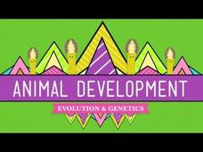 Animal Development: We're Just Tubes Video