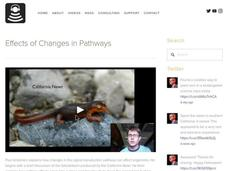Effects of Changes in Pathways Video