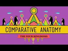 Comparative Anatomy: What Makes Us Animals Video