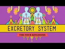 The Excretory System: From Your Heart to the Toilet Video
