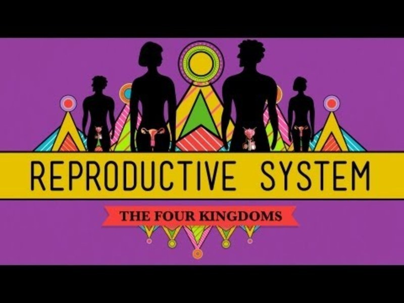 The Reproductive System: How Gonads Go Video