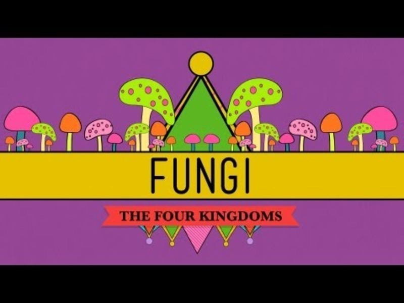 Fungi: Death Becomes Them Video
