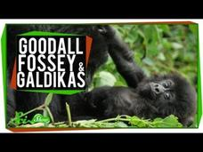 Great Minds: Goodall, Fossey and Galdikas Video