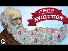 The 12 Days of Evolution - Complete Series! Video