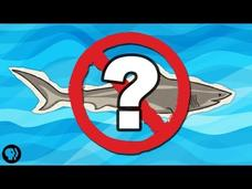 What If There Were No Sharks? Video