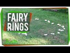 Fairy Rings Video