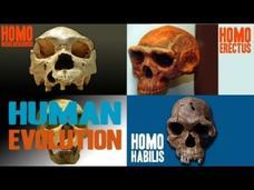 Facts about Human Evolution Video