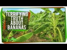 The Terrifying Truth About Bananas Video