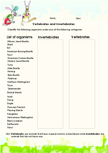 Vertebrates An Invertebrates Lesson Plans Worksheets