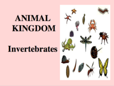 Animal Kingdom - Invertebrates Presentation