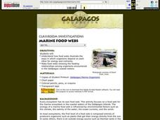 Marine Food Webs Lesson Plan