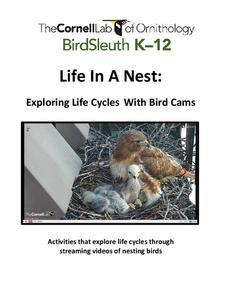 Life In A Nest: Exploring Life Cycles With Bird Cams Unit
