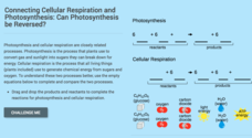 Cellular Respiration: Can Photosynthesis Be Reversed? Interactive