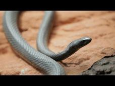 Why Do Venomous Animals Live In Warm Climates? Video