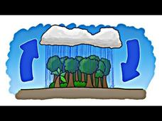 Which Came First - The Rain or the Rainforest? Video
