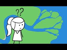 Why Do Rivers Have Deltas? Video
