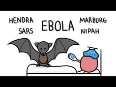 Why do Bats Transmit so many Diseases like Ebola? Video