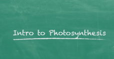 Introduction to Photosynthesis Video