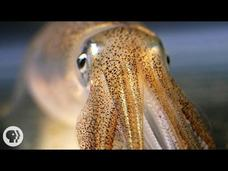 You're Not Hallucinating. That's Just Squid Skin. Video