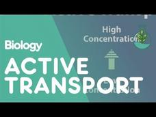 Transport in Cells: Active Transport Video