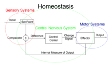 Homeostasis of Thermoregulation Lesson Plan