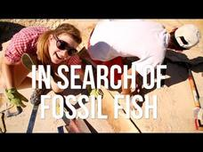 In Search of Fossil Fish Video