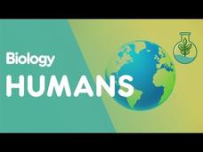 The Evolution of Humans Video