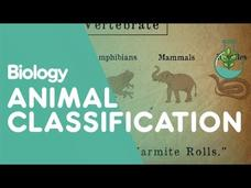 Animal Classification Video