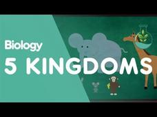 The 5 Kingdoms in Classification Video