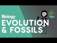 Fossils and Evidence for Evolution Video