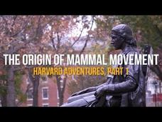 The Origin of Mammal Movement: Harvard Adventures, Part I Video