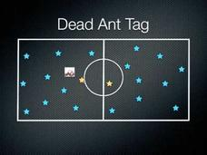 Dead Ant Tag Activities & Project