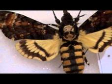 Chicago Adventure, Part 8: How to be an Insect Video