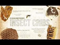 Insect Cribs Video