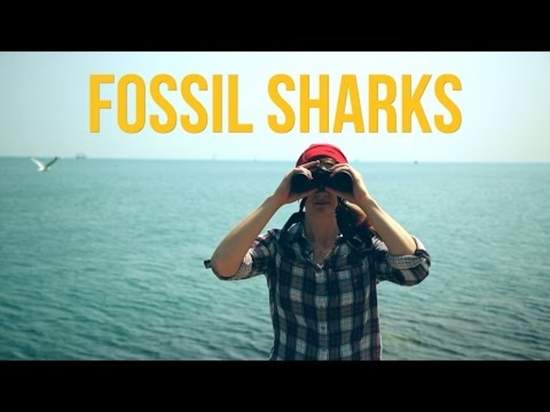 Fossil Sharks Video