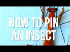How to Pin an Insect Video