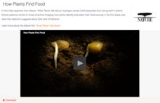 How Plants Find Food Video