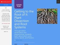 Get to The Root of It! Lesson Plan