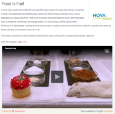 Food Is Fuel Video