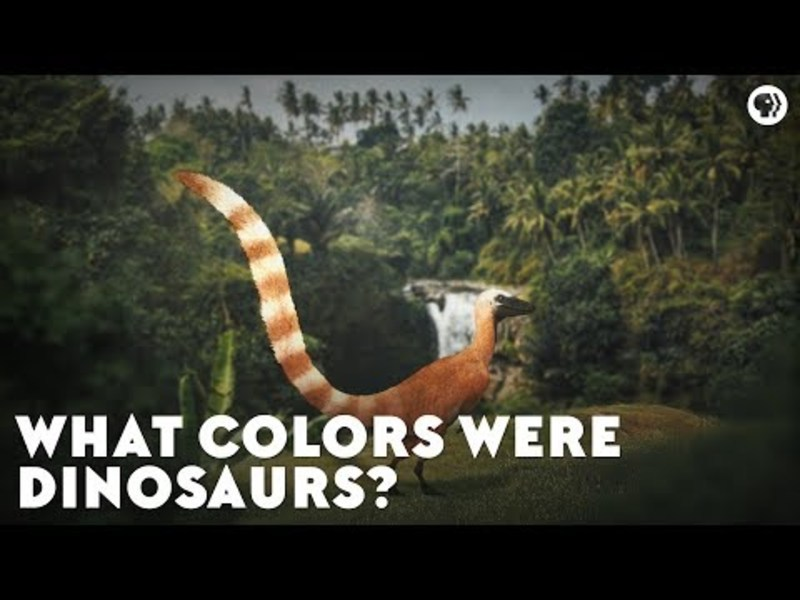 What Colors Were Dinosaurs? Video