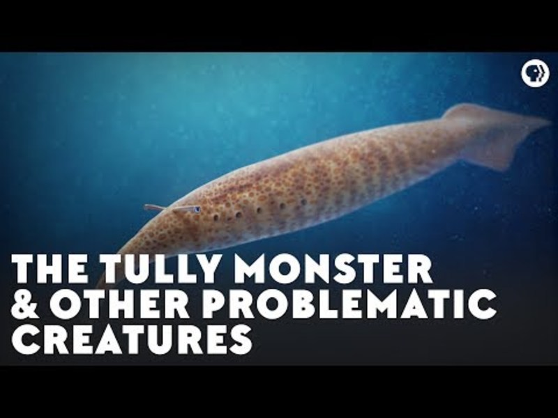 The Tully Monster and Other Problematic Creatures Video