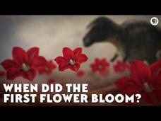 When Did the First Flower Bloom? Video