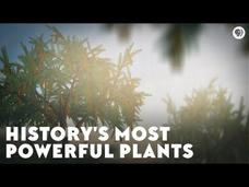 History's Most Powerful Plants Video