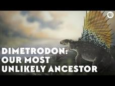 Dimetrodon: Our Most Unlikely Ancestor Video