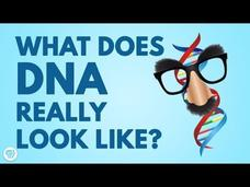 DNA Doesn't Look Like What You Think! Video