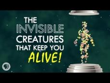 Your Microbiome: The Invisible Creatures That Keep You Alive! Video