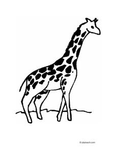 Giraffe Worksheet